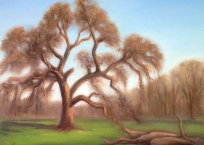 Heritage Oak  (Oils 20″x16″)
