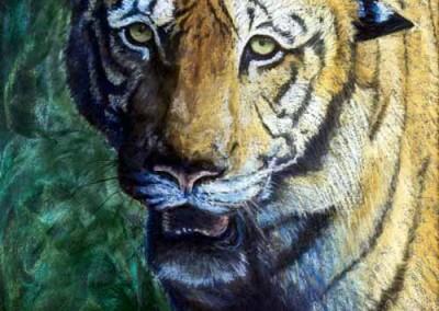 """Tiger (Pastel 12""""x16"""")"""