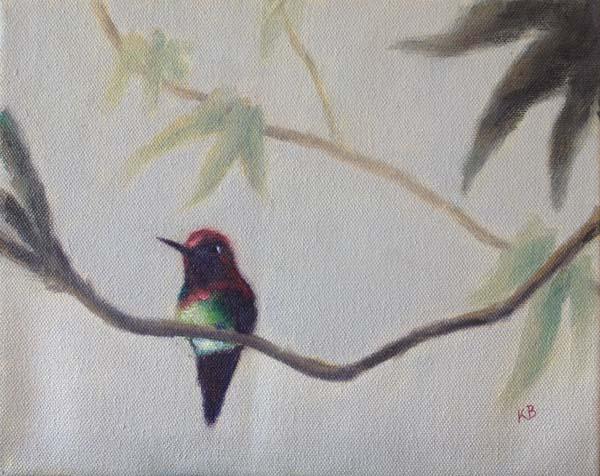 Anna's Hummingbird - Sacramento Plumage