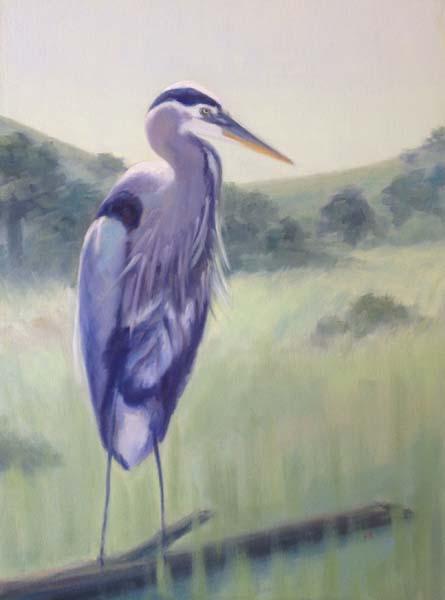 Great Blue Heron - Sacramento Plumage