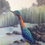 Green Heron - Plumage