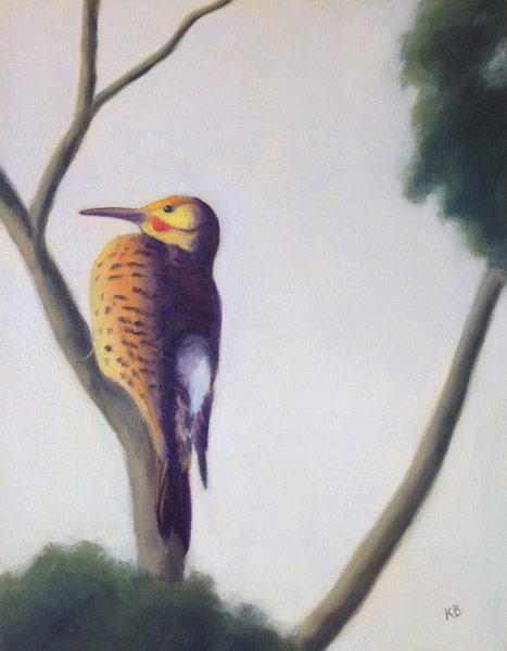 Northern Flicker (Male) - Sacramento Plumage