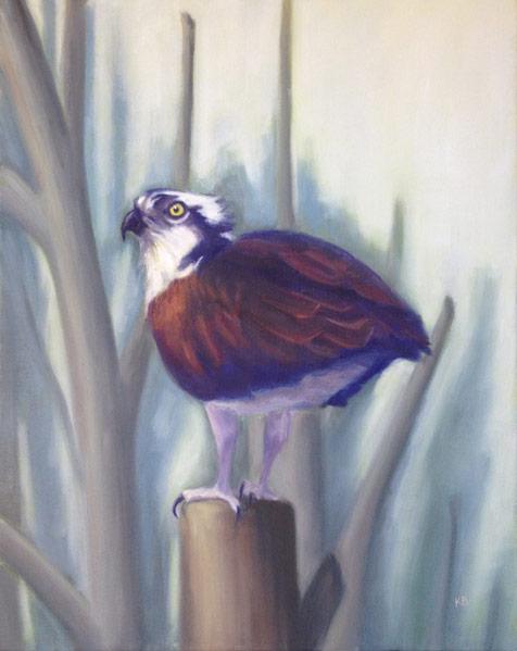 Osprey - Sacramento Plumage