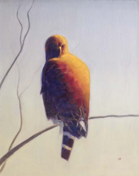 Red Shouldered Hawk 1 - Sacramento Plumage