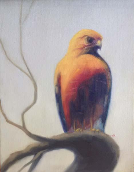 Red Shouldered Hawk 2 - Sacramento Plumage